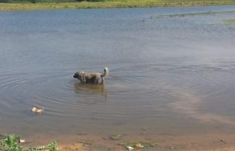 Ömerli Barajı Mikrop Saçıyor..