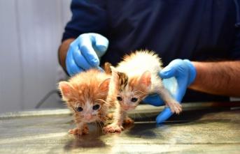 Depremzede kedilere Narlıdere'de sıcak yuva